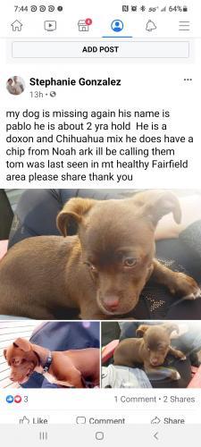 Lost Male Dog last seen elkwood close to udf on Hamilton and dollar tree ares , Cincinnati, OH 45240