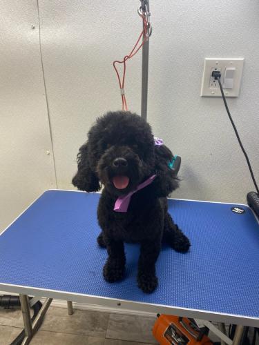 Lost Female Dog last seen Near Central Blvd, Miami, FL 33144, Miami, FL 33144