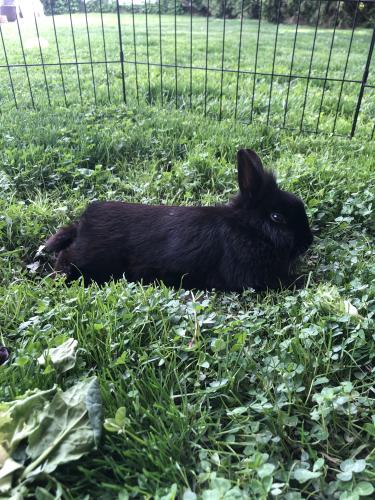Found/Stray Unknown Rabbit last seen Daniels park, Willoughby, OH 44094
