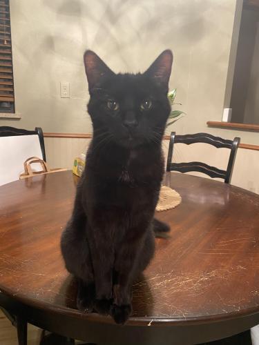 Found/Stray Unknown Cat last seen NW 46 and Tulsa , Oklahoma City, OK 73112