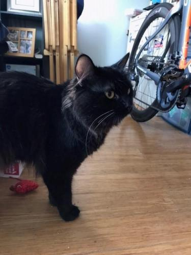 Found/Stray Unknown Cat last seen Glasgow Place and 141st Street in Hollyglen (South Bay), Hawthorne, CA 90245