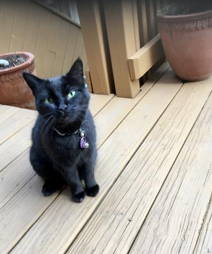 Lost Female Cat last seen Near Swann St. NW, Washington, DC 20009