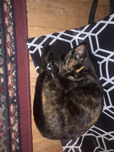Found/Stray Female Cat last seen By Dairy Queen , Cleveland, OH 44109