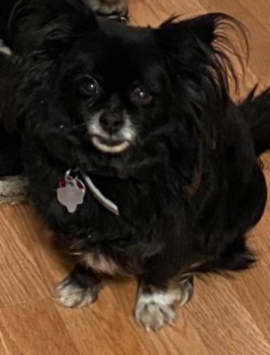 Lost Female Dog last seen Parkrow  in Arlington Tx, Arlington, TX 76010