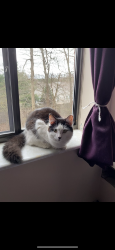 Lost Female Cat last seen Streeter rd, Portage County, OH 44255