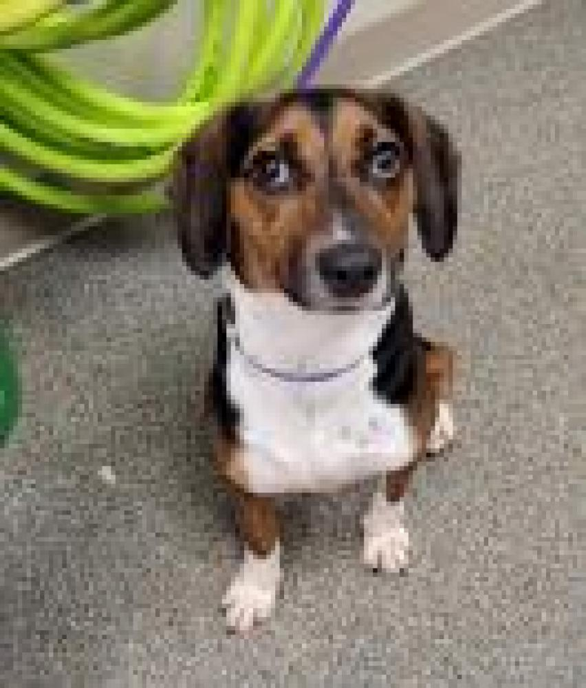 Shelter Stray Male Dog last seen Hamilton, OH 45013, Hamilton, OH 45011