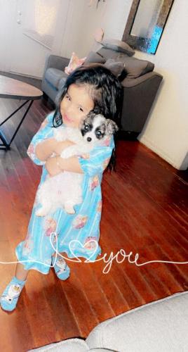 Lost Female Dog last seen Nw 16 okc , Oklahoma City, OK 73107
