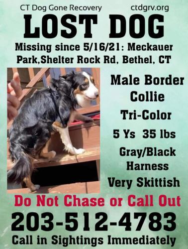 Lost Male Dog last seen Meckauer Park Shelter rock rd bethel , Bethel, CT 06801