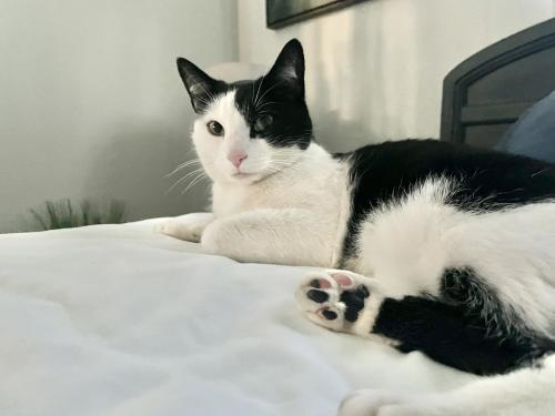 Lost Female Cat last seen Anne drive, Berea, OH 44017