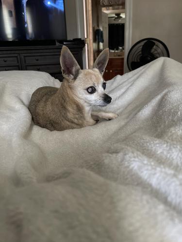 Lost Female Dog last seen Autumn harvest and cotswold , Virginia Beach, VA 23464