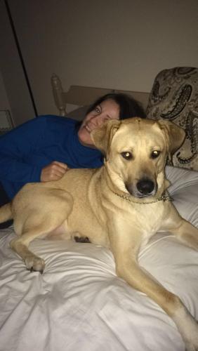 Lost Male Dog last seen Linden Ave. , Cincinnati, OH 45239