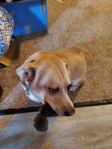 Lost Male Dog last seen HOME, Downtown Lodi, Ohio, Lodi, OH 44254