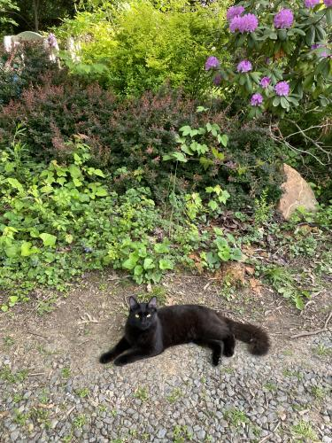 Lost Male Cat last seen Kerns Road, between Barrett & Annandale, Falls Church, VA 22042