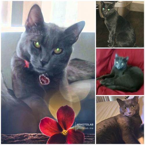 Lost Male Cat last seen Park and Beebe, Gilbert, AZ 85297