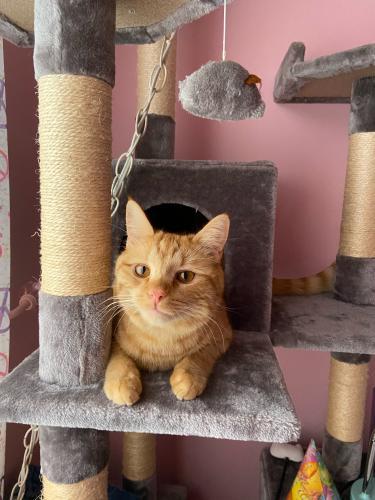 Lost Male Cat last seen Pavilion Dr, Gaithersburg, MD 20878