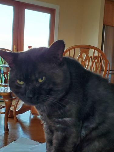 Lost Male Cat last seen Albaugh Rd, Mount Airy, Mount Airy, MD 21771