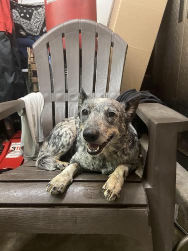Found/Stray Female Dog last seen Eldridge and West Little York, Houston, TX 77041