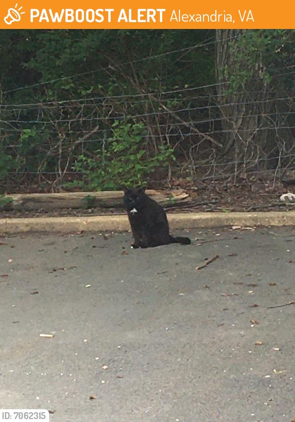 Found/Stray Unknown Cat last seen Near Vine Street, near Uhaul truck rentals. Vine Street is off of Van Dorn St, Alexandria, VA 22310