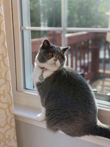 Lost Female Cat last seen Digby Grn & Roudsby Ct., Alexandria, VA 22315