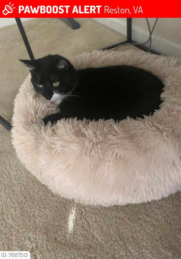 Lost Male Cat last seen Bennington Road , Reston, VA 20194