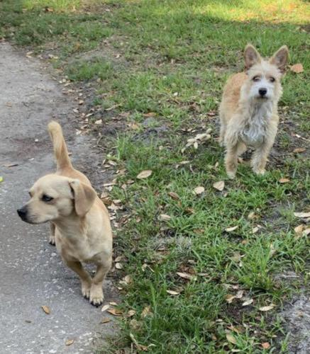 Lost Unknown Dog last seen Sunstop gas station exit 460 Florida, Jennings, FL 32053