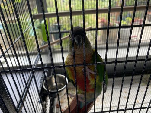 Found/Stray Unknown Bird last seen Huffmeister and 529, Hearthstone, TX 77041