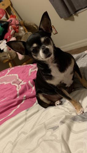 Lost Female Dog last seen Near NE Old Valdosta Rd Pinetta Fl, Pinetta, FL 32350