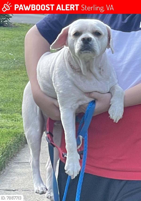 Lost Male Dog last seen filmore avenue sterling va , Sterling, VA 20164