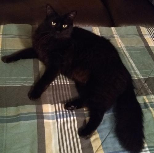 Lost Male Cat last seen Professional Glen and South Marion Avenue Lake City, Florida, Lake City, FL 32055