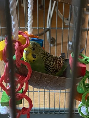 Found/Stray Unknown Bird last seen Kennedy drive, mclean chase apmts, McLean, VA 22043