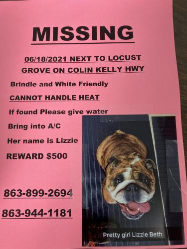Lost Female Dog last seen Near Locust Grove , Madison, FL 32340
