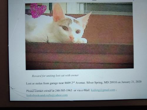 Lost Male Cat last seen 2nd Avenue Silver Spring, MD, Silver Spring, MD 20910