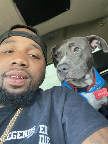 Lost Male Dog last seen Fuqua , Houston, TX 77089
