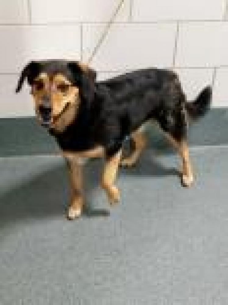 Shelter Stray Male Dog last seen Springfield, VA 22150, Fairfax, VA 22032