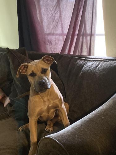 Found/Stray Male Dog last seen De Soto and Wheatley , Houston, TX 77088