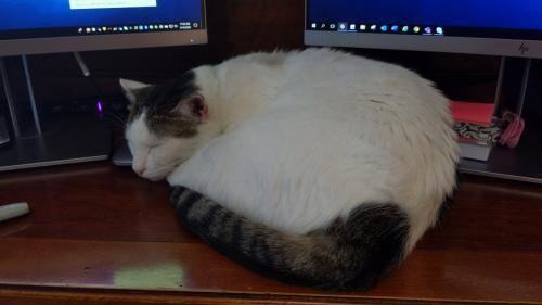 Lost Male Cat last seen Grant &Louetta/Spring-Cypress, Cypress, TX 77429