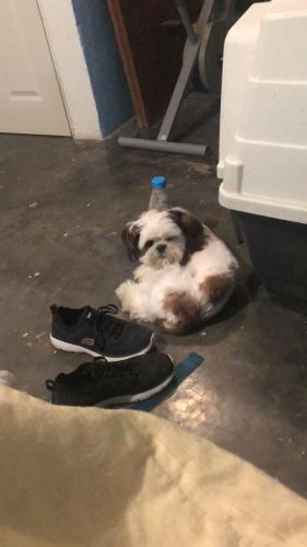 Lost Male Dog last seen Meadow creek villiage park, Houston, TX 77017