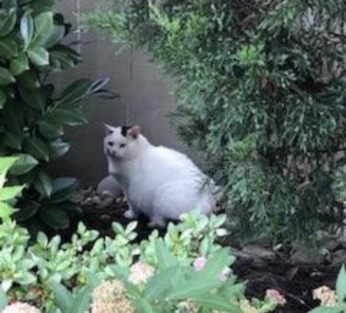 Found/Stray Unknown Cat last seen Bonefish Grill, Centreville, VA 20121