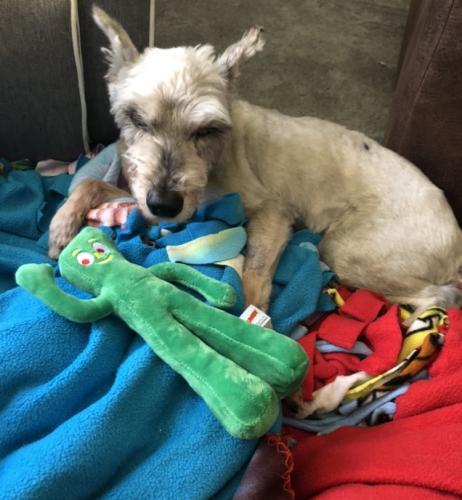 Lost Male Dog last seen Gresham / Braddock Road, Springfield, VA 22151