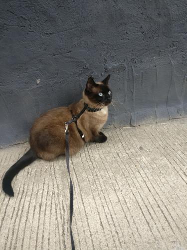 Lost Female Cat last seen Otis Pl and Warder NW, Washington, DC 20010