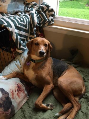 Lost Female Dog last seen Hall Shop Road, Highland, MD 20777