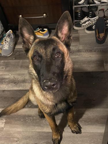Lost Male Dog last seen HWY 6, Houston, TX 77083