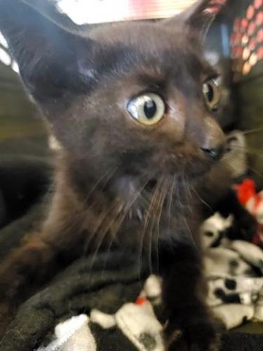 Found/Stray Male Cat last seen Cameron St And Buchanan St, Alexandria VA, Alexandria, VA 22314