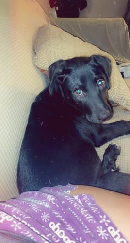 Lost Female Dog last seen Gatewood and Ingomar, Houston, TX 77053