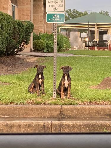 Found/Stray Male Dog last seen Red bluff park , Pasadena, TX 77506