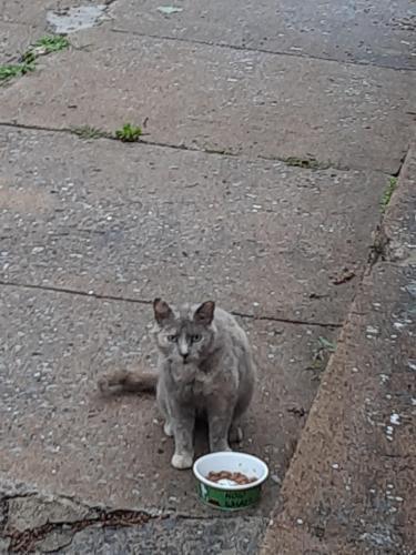 Found/Stray Female Cat last seen Near 9th ave Brunswick md, Brunswick, MD 21716