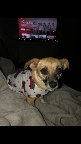 Lost Female Dog last seen Near , Dickinson, TX 77539