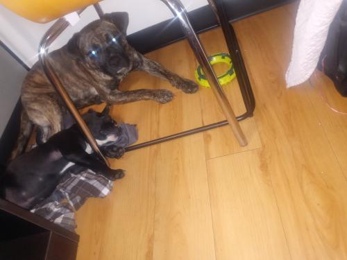 Lost Male Dog last seen Near w and tc jester, Houston, TX 77008
