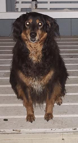 Lost Female Dog last seen Black Rock Road, Germantown, MD 20874