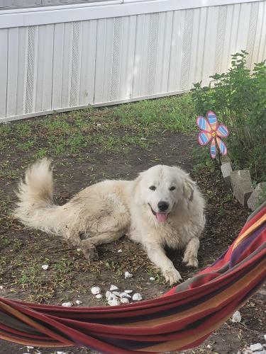 Found/Stray Male Dog last seen Wade rd, Baytown, TX 77521